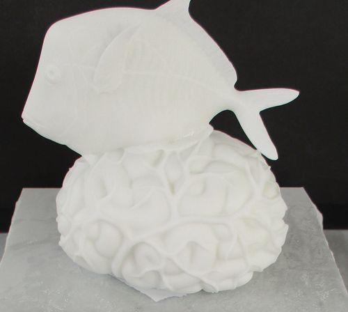 Brein met een selene vomer  (Hommage aan Jacques Cousteau) by Fabre Jan