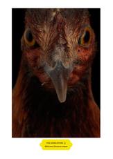 Red Jungle Fowl (G) Vesta Klein by Vanmechelen Koen