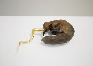 Golden Cord Platypus with Horn by Vanmechelen Koen