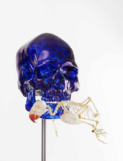 Skull with Parakeet by Fabre Jan