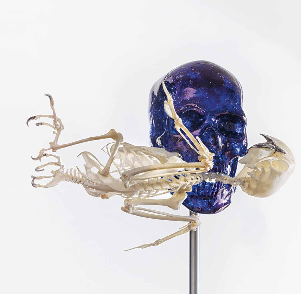 Skull with Macaw by Fabre Jan