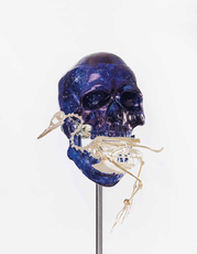 Skull with Grebe by Fabre Jan