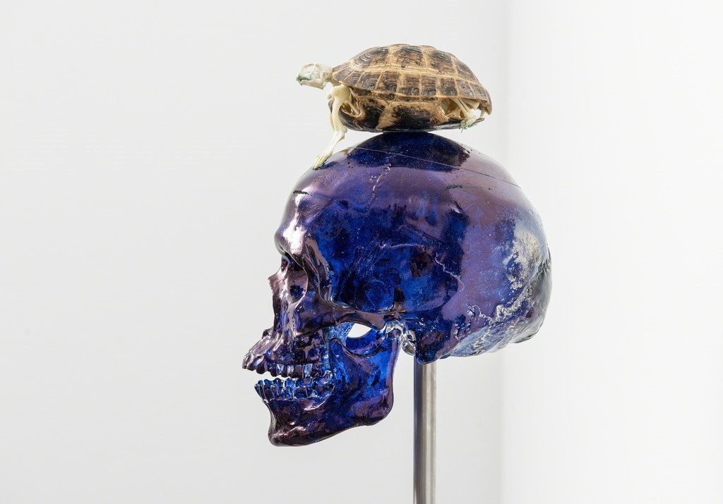 Skull with Turtle by Fabre Jan
