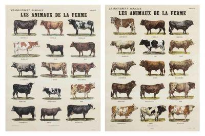 Les animaux de la ferme    by Broodthaers Marcel