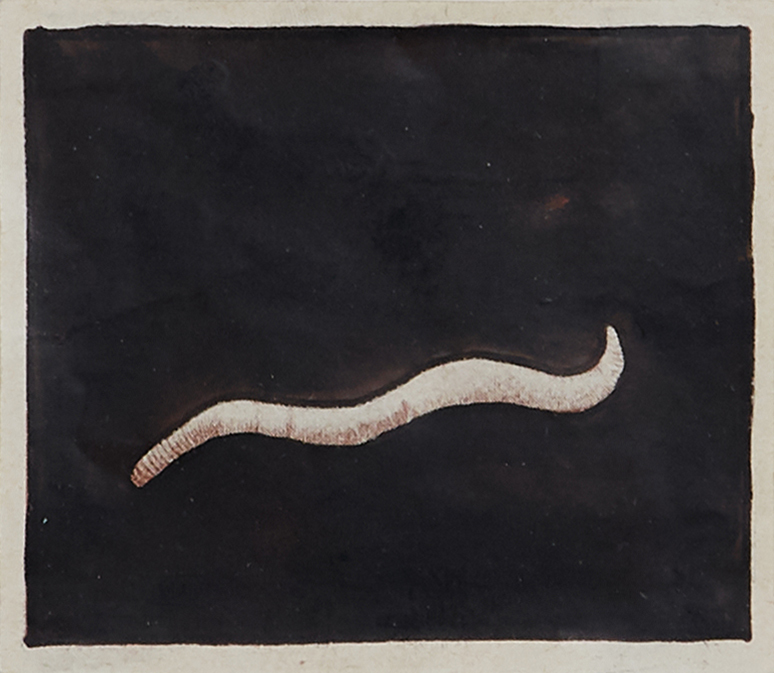 Tapeworms by Fabre Jan