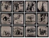 12 Collodions The Legend, Tribute to Tim 1/3 by Van Malderen Griet
