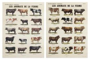 Les animaux de la ferme   83/120 by Broodthaers Marcel